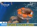 第五届婴儿游泳比赛在京顺利落幕 (65播放)